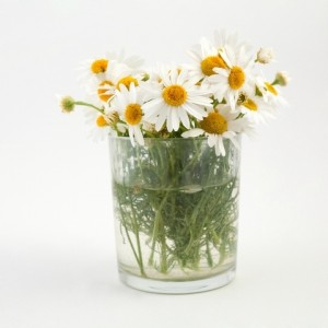 hand-picked-flowers-cups--large-msg-135437706424